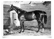 Birdcatcher: Ricco's thoroughbred bloodlines