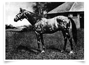 The Tetrarch, the spotted wonder, who appears five times in Ricco's thoroughbred bloodlines